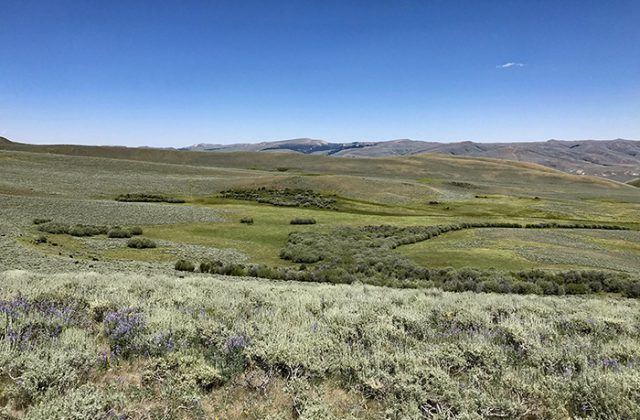 Conserving Superb Wildlife Habitat and Family Ranching